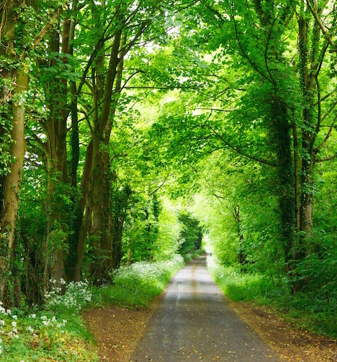 greenery and road