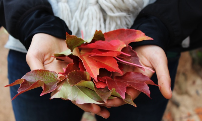 holding leaves